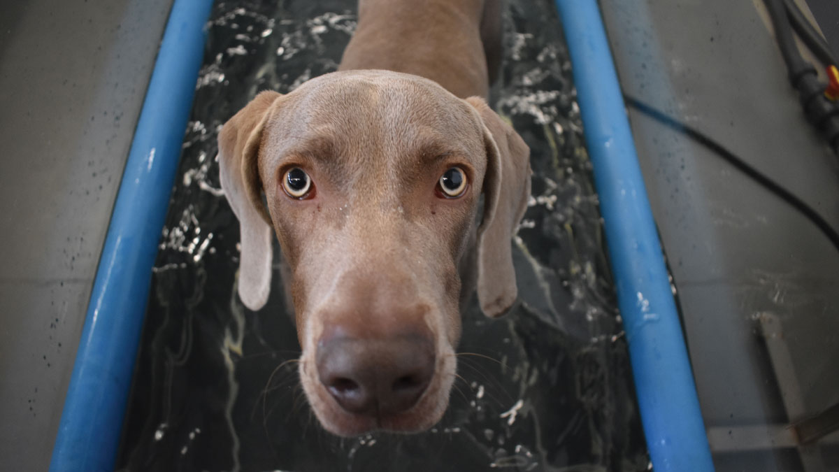 mornington dog hydrotherapy
